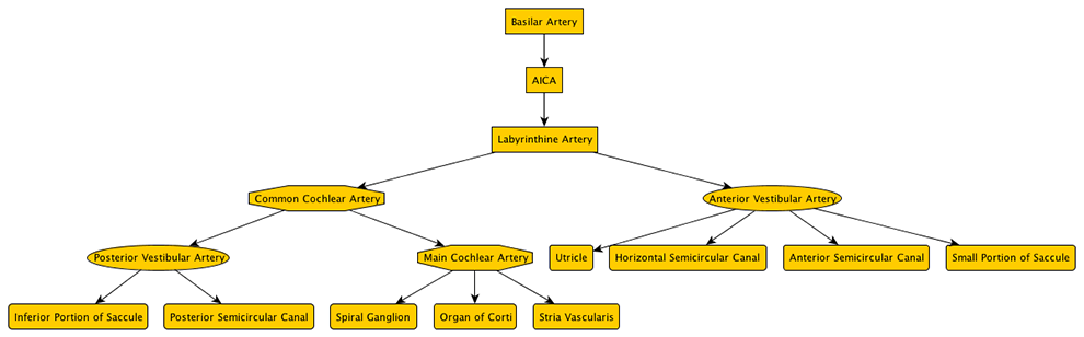 flow chart blood supply of brain: Arterial supply to the structures of balance